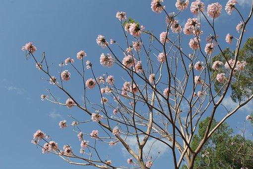 Flower, Nature, Pink, Natural, Summer, Petals, Outdoor