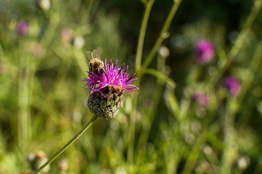 Bee, Flower, Pollen, Nectar, Garden, Macro, Nature
