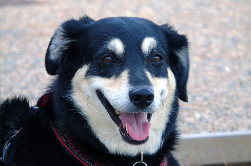Dog, Pet, Animal, Puppy, Cute, Adorable, Mammal, Sweet
