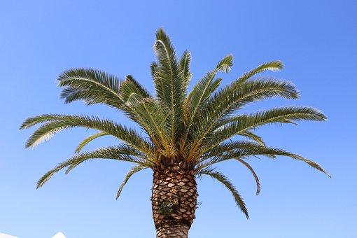 Tree, Summer, Sky, Blue, Sun, Hot, Beach