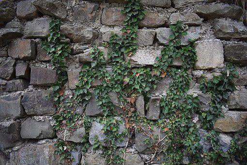Background, Wall, Stones, Ivy, Texture, Template, Stone