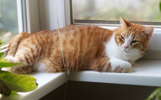 Cat, Pet, Feline, Domestic, Stretched, The Window Sill