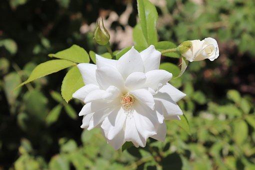 Flower, White, Green, Bloom, Spring, Blossom, Nature