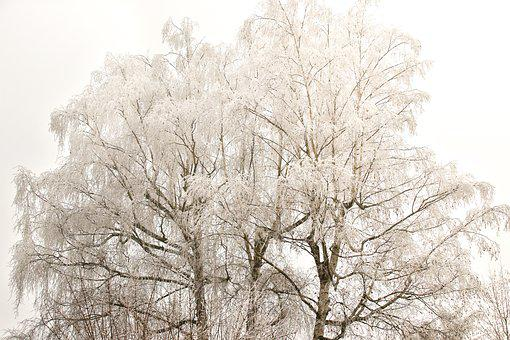 Winter, Tree, Snow, Nature, Landscape, Cold, Wintry