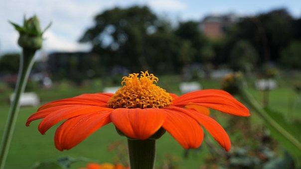 Coneflower, Blossom, Bloom, Flower, Orange, Yellow