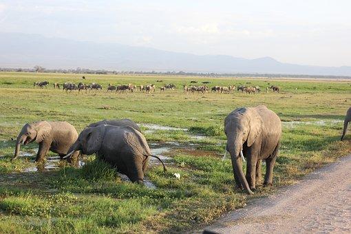 Elephant, Cooling, Kenya, Amboseli, Wet