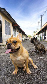 Dog, Animal, Garden, Nature, French Bulldog