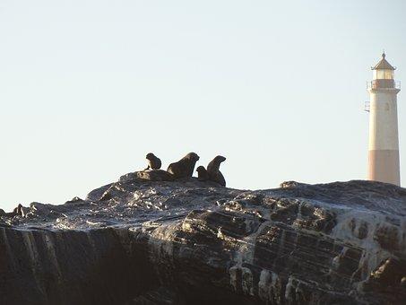 Seals, Sea, Wave, Spray, Crawl, Namibia, Atlantic, Rock