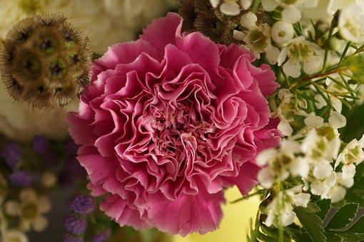 Carnation, Flower, Strauss, Blossom, Bloom