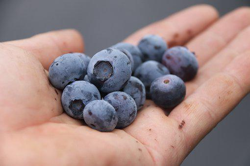 Berries On Hand, Blue Berries, Berries, Blueberries