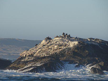 Seals, Sea, Wave, Spray, Crawl, Namibia, Atlantic, Rock