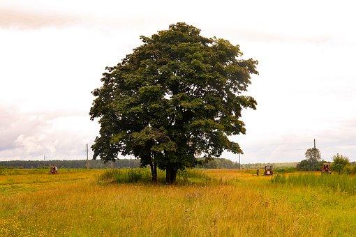 Field, Village, Dacha, Tree, The Lone, Lonely Tree