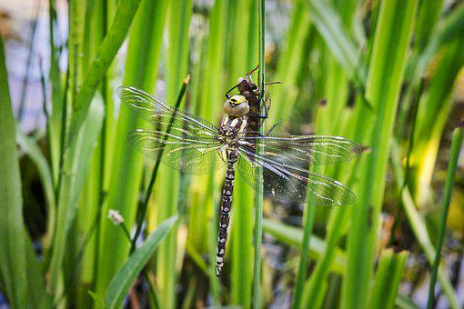 Nature, Dragonfly, Green, Insects, Spring, Animals