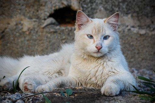 Cat, Animal, Pet, Portrait, Feline, Nature