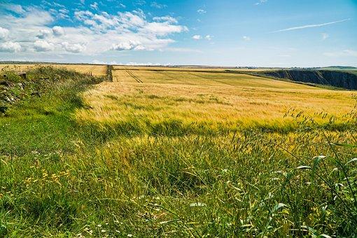 Field, Fields, Grass, Landscape, Agriculture, Nature