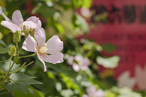 In The Early Summer, Flour, Flowers, Natural, Plant