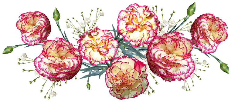Flowers, Carnations, Striped, Fragrant, Cut Out