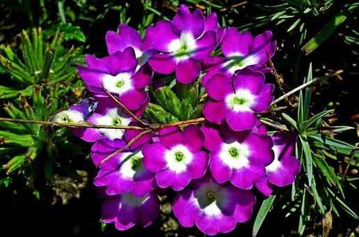 Flowers, Garden, Summer, The Petals, Nature, Romantic