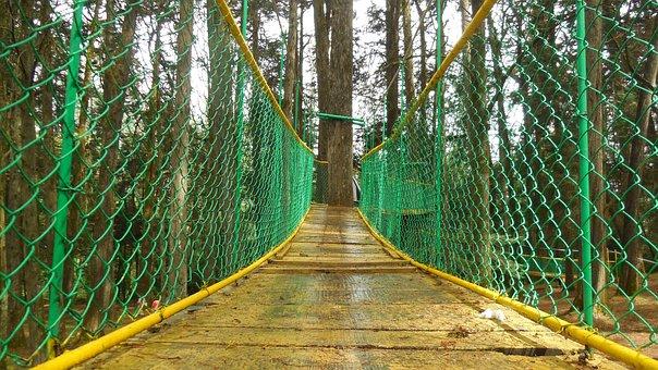 Forest, Bridge, Hanging, Adventure, Trees