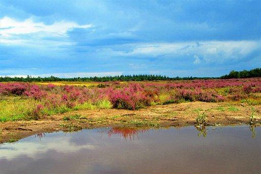 Heide, Heideveld, Heaven, Rain, Clouds, Water, Grasses