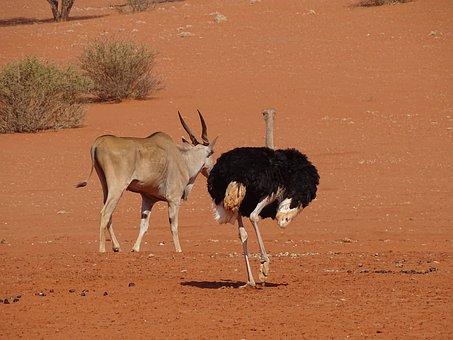 Bouquet, Desert, Namibia, Sand, Roter Sand, Kalahari