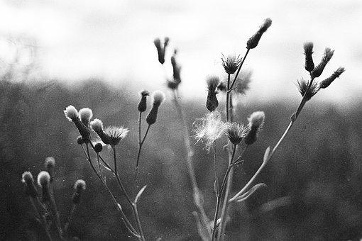 Macro, Black And White, Grass, Close Up, Garden, Web