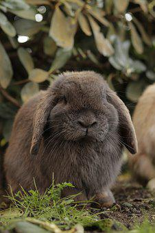 Bunny, Rabbit, Easter, Hare, Cute, Animal, Nature