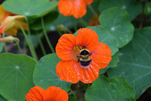 Bee, Pollination, Nectar, Flower, Nature, Plant, Bloom