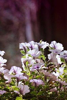 Flowers, Summer, Nature, Blossom, Bloom, Garden, Plant
