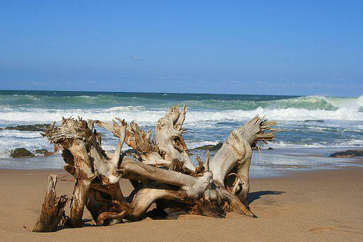 See, Nature, Beach, Ocean, Landscape, Tree, Sand, Water