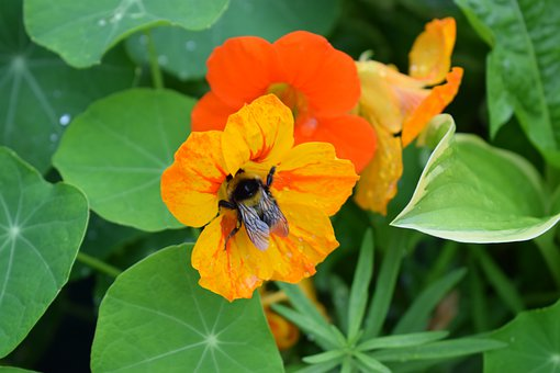 Bee, Pollinating, Insect, Nectar, Flower, Nature, Plant