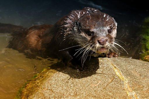 Otter, Playful, Play, Animal World, Mammal, Animal