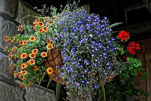 Hanging Basket, Flowers, Summer, Nature, Blossom, Bloom