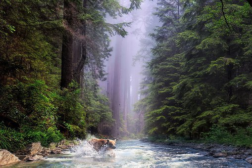 Forest, Nature, Tree, Landscape, Redwood, National Park