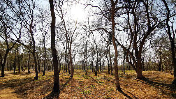 Forest, Dry Forest, Nature, Landscape, Trees