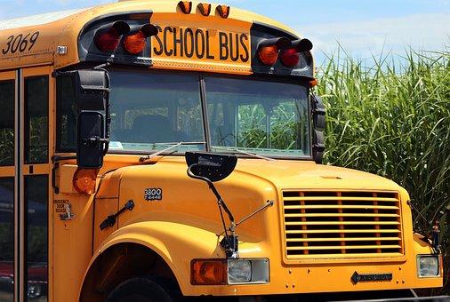 School Bus, School, Bus, Transport, Education, Vehicle