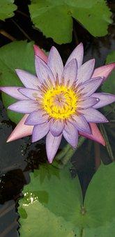 Flower, Garden, Lake, Botanical Garden, Water, Leaf