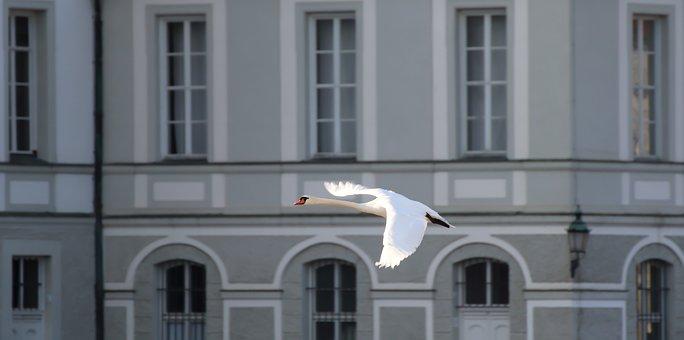 Swan, Flight, Flying, Building, Castle, Wing, Bird