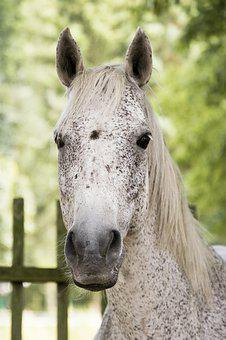 Horse, Mold, Fly Mold, White, Portrait, Animal, Nature