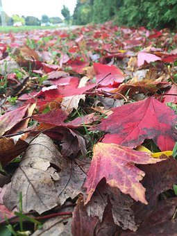 Autumn, Leaves, Canada, Nature, Colorful, Fall, Mood