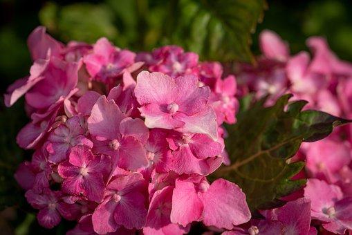 Blossom, Bloom, Flower, Pink, Garden, Flower Garden