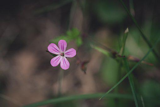 Blossom, Bloom, Flower, Pink, Small, Small Flower