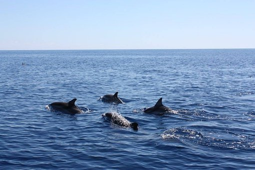 Dolphin, Sea, Water, Ocean, Dolphins, Mammal, Nature