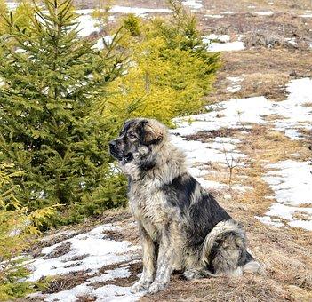 Dog, Tree, Nature, Animal, Forest, Landscape, Green
