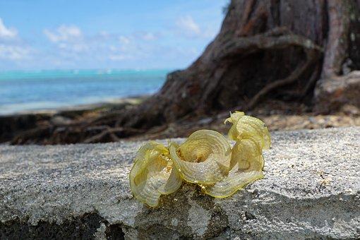 Seaweed, Green, Beach, Plant