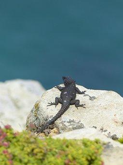 Rock, Lizard, Reptile, Animal World, Animal, Close Up