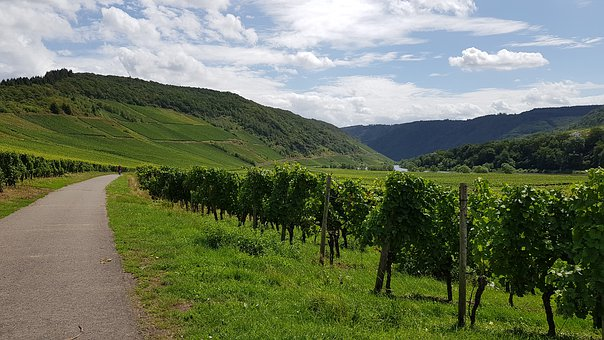 Mosel, Cycle Path, Wine, Vines, Rebstock, Vacations