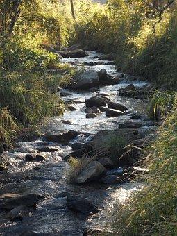 River, Bach, Water, Landscape, Forest, Mystical