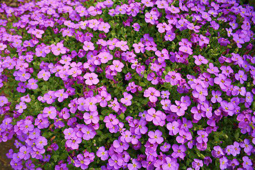 Flowers, Pink, Purple, Small, Nature, Blossom, Summer