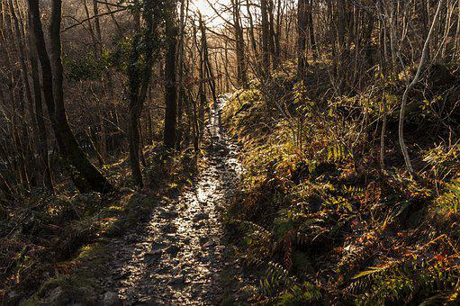 Forest, Trail, Path, Nature, Hiking, Trees, Landscape
